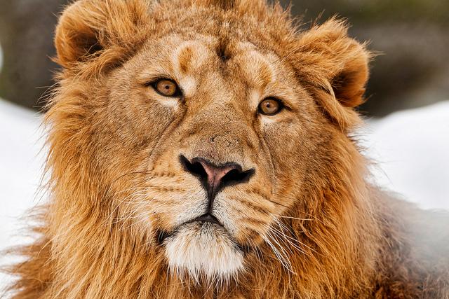LionWinter